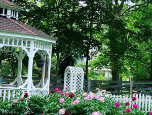 white gazebo, arbor and pink and burgundy peonies
