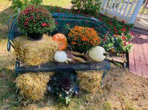 Mums and hay arranged around a metal garden bench.