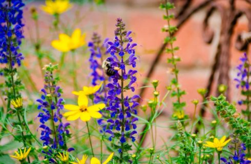 Close up view of purple and yellow flowers and a bumble bee