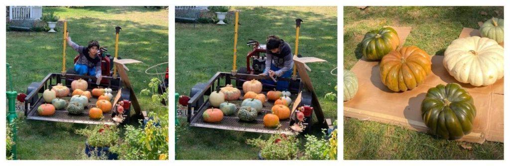 young man spraying sealant ono pumpkins for display